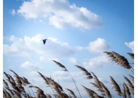 白天一只鸟在多云的天空下飞行的低角镜头_10759061