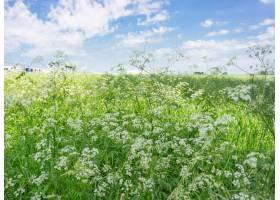 白天开着野花的广阔绿色田野_10376869