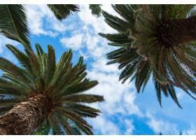 碧绿的棕榈树在蔚蓝的晴空和淡淡的云彩的衬_9081973