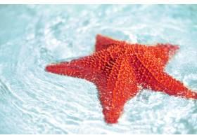 碧蓝的海水中美丽的五颜六色的鲜红海星_7250504