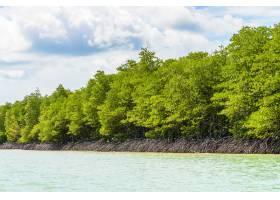 泰国美丽的热带红树林_3574254