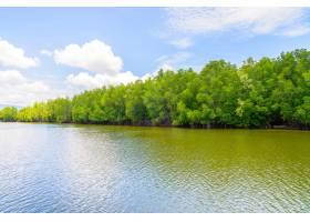 泰国美丽的红树林景观_3576404