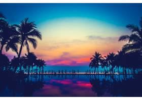 泳池自然景观棕榈海_1044040