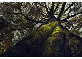 森林里长着一棵又高又粗的老树的美丽结局_10400050