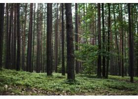 森林里高大树木的美丽景色_11486517