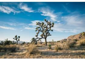 沙漠树木在干燥的田野上拍摄的美丽风景令_7955722