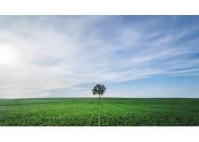 德国北部田野中央的一棵树的美丽景色_11061867