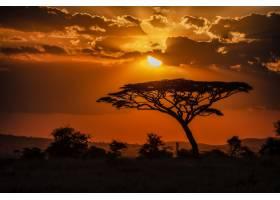 日落时稀树大草原上一棵树的轮廓令人着迷的_12449382