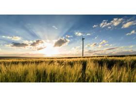 带风车的玉米地_9077196