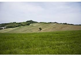 多云的天空下有许多树木的美丽的绿色景观_12858419