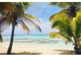 多米尼加共和国海滩上高大的棕榈树高高耸_1275186