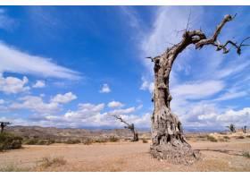 在晴朗蓝天的沙漠土地上低角拍摄一棵枯树_10175729