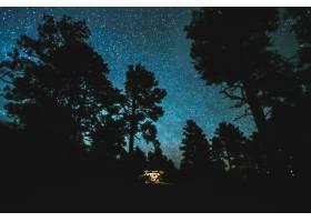 在繁星点点的夜空下美丽的树苗_8048674