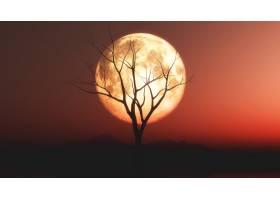 在红色月色天空的衬托下老树的剪影景观_6732017