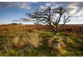 大草原上孤立的一棵树_9655112