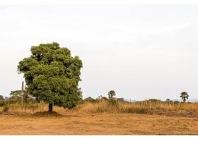 天晴树清的非洲自然风光_12390730