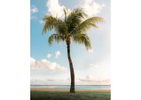 在阳光明媚的天空下在海边垂直拍摄一棵绚_9076564