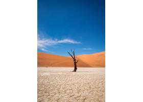 垂直拍摄的沙漠中的一棵无叶树沙丘在_9932210