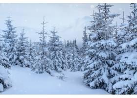 冬季景观树木和白霜中的栅栏背景中有一些_9143703