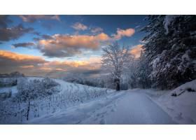克罗地亚的一条小路和树木在多云的天空下闪_11943227