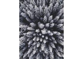 从空中俯瞰白雪覆盖的冷杉树上美丽的冬季风_13210772