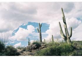 令人叹为观止的多云天空下长着绿色仙人掌的_8281079