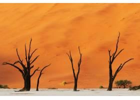 三棵光秃秃的沙漠树的美丽照片背景是一个_10945045