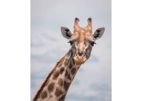 一只可爱的长颈鹿在多云的天空中的特写镜头_8753514