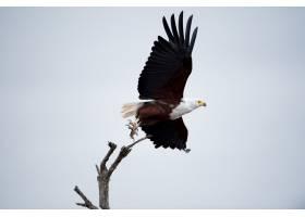 一只美丽的鹰在天空中飞翔的低角镜头_10399226