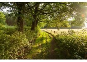 荷兰乡间小路上日出的美丽镜头_1300573301