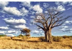 蓝天下稀树大草原上一棵树的美丽照片_1086037601