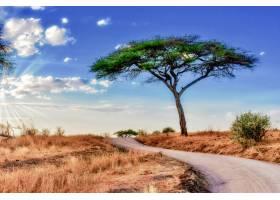 蓝天下稀树大草原上一棵树的美丽照片_1118333001