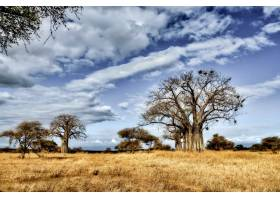 蓝天下稀树大草原上一棵树的美丽照片_1118340901