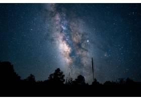 蓝星点点的夜空下美丽的低角拍摄的森林_985148001
