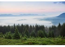 薄雾弥漫的喀尔巴底山脉景观中有冷杉林树_1000157501