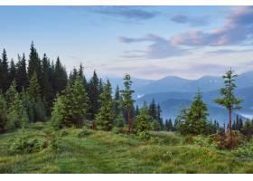薄雾弥漫的喀尔巴底山脉景观中有冷杉林树_1000158801