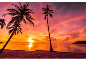 日落时分在热带海滩和海边种着椰子棕榈树_353188101