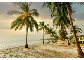 日落时分在蓝天下近海的沙滩上低角拍摄棕_1099040001