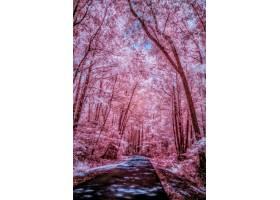 用红外线拍摄的被美丽的高大树木包围的道路_1080995401