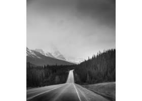 晴朗天空下森林中央道路的灰度垂直镜头_1106305301