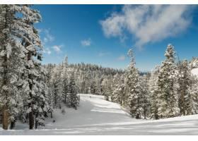 晴朗天空下长满冷杉的雪林令人叹为观止的景_1075898501