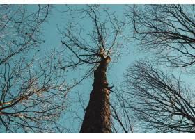 白天蓝天衬托下的高大树木的低角度拍摄_1285934401