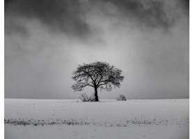 白雪皑皑的小山上的一棵无叶树背景是黑白_828116501