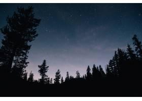 森林和夜空中的星空_1181834801