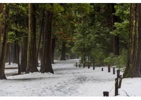 约塞米蒂国家公园积雪覆盖的高大树木的美丽_999147901