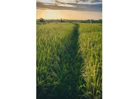 巴厘岛仓谷拍摄的日落草甸垂直镜头_907723301