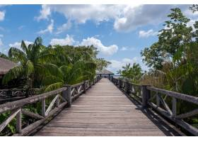 巴西多云天空下热带棕榈树间美丽的木桥_1150294201