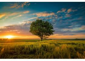 广角拍摄的是在被草包围的夕阳中一棵树在_1134206501