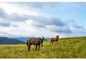 在乌克兰喀尔巴底山脉的草地上吃草的马_808564501