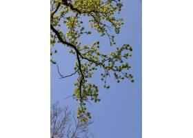 在天空的衬托下低角拍摄一根绿叶的树枝_1306072201
